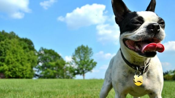 Pet Friendly Hotels Chicago
